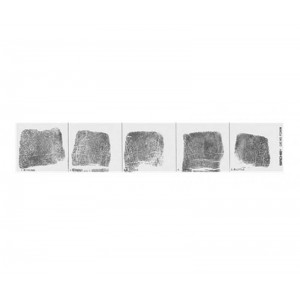 Fingerprint Replacement Record Strip - Left & Right Hand - 100 each hand